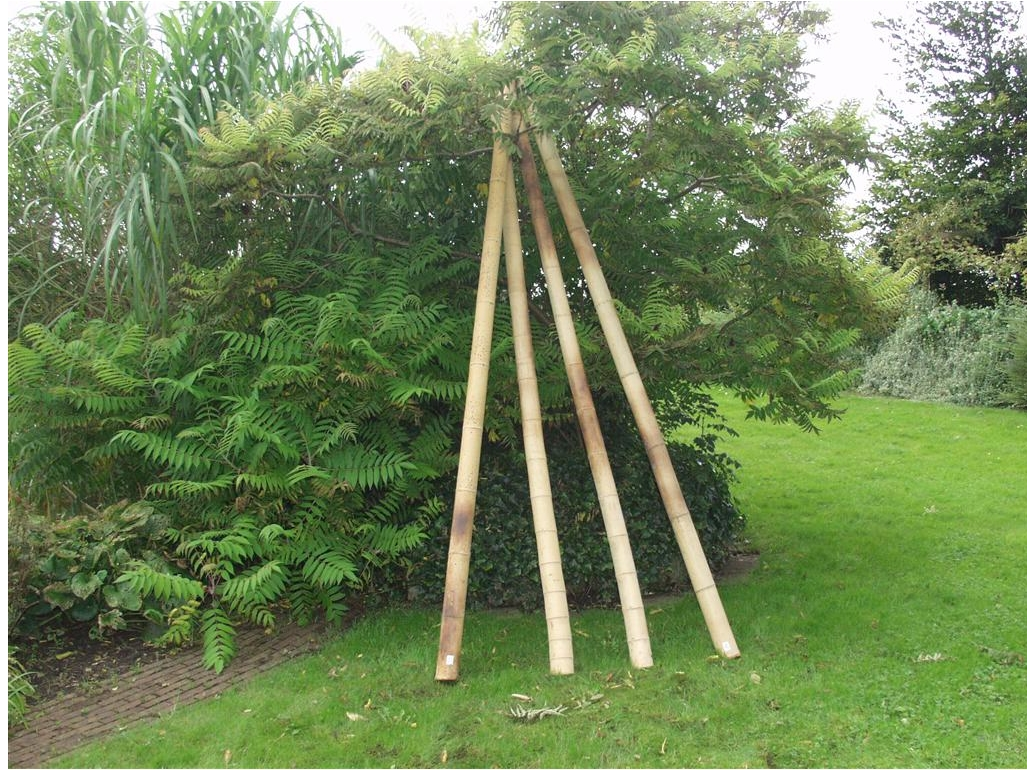 Bamboepaal Natuurlijke afscheidingen Schermen  bij Houthandel Jan Sok